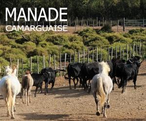 SITE MANADE CAMARGUAISE